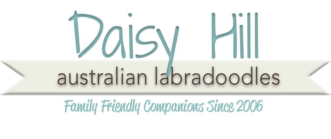Daisy Hill Australian Labradoodles