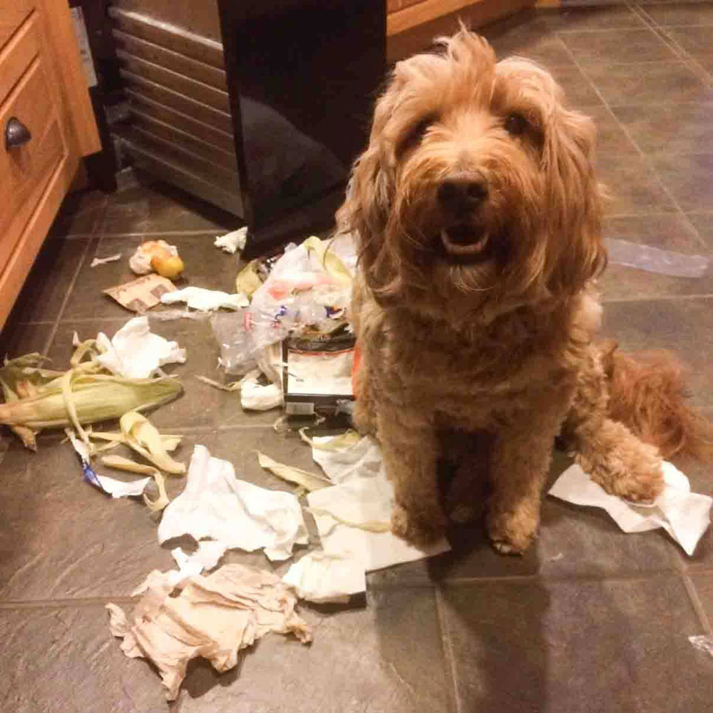 Puppy Proofing Tips